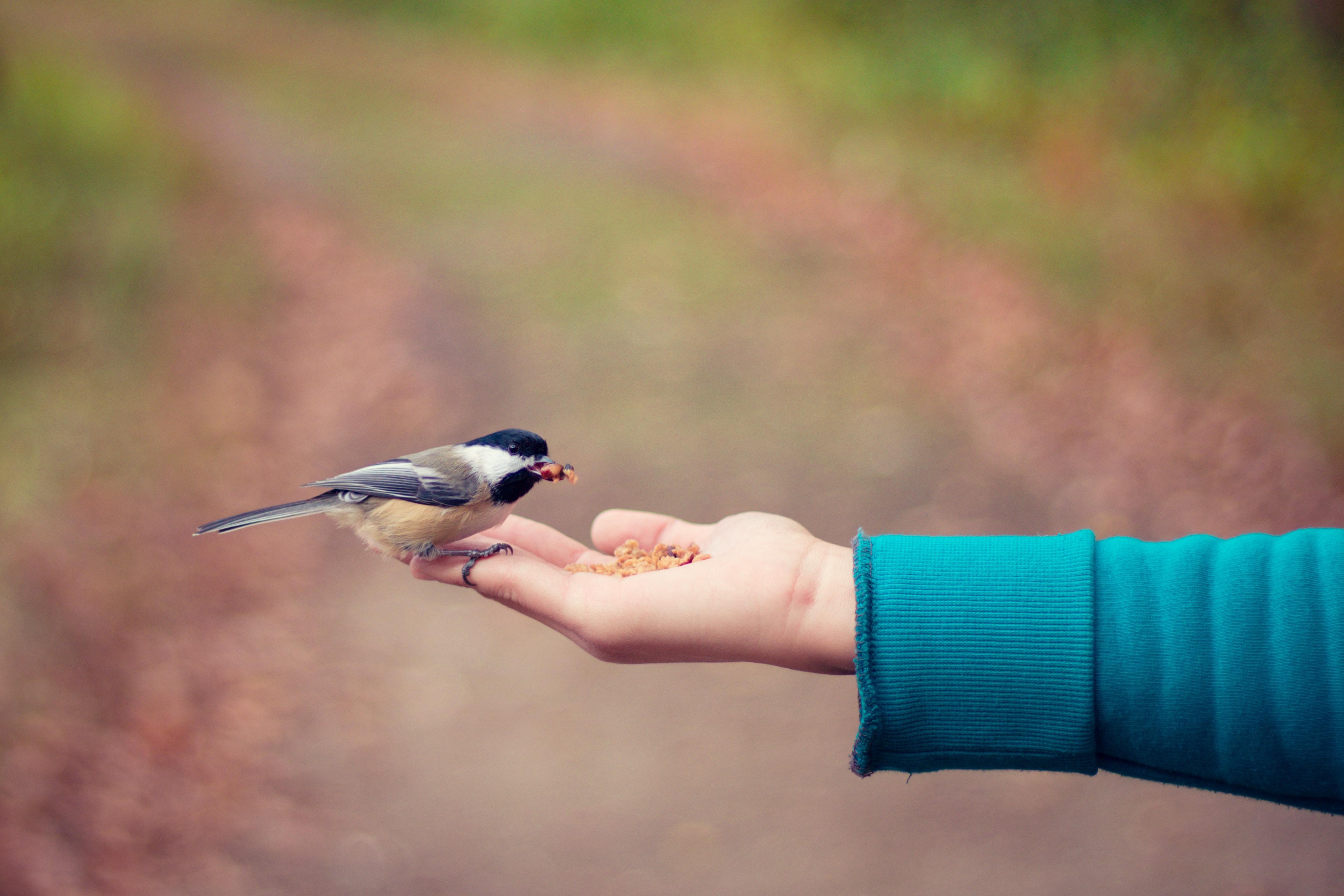 Es gibt immer genug – Von Großzügigkeit und Versorgung