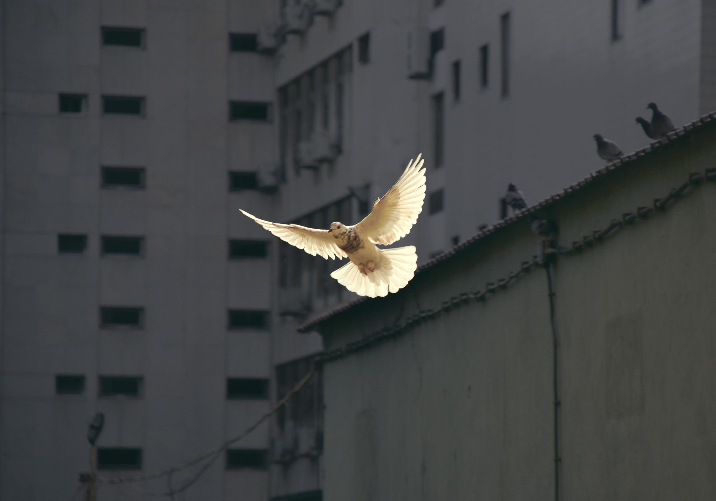 Der Heilige Geist – er leitet uns in die Wahrheit